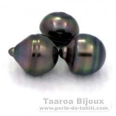 Lotto di 3 Perle di Tahiti Cerchiate C di 12.3 a 12.4 mm